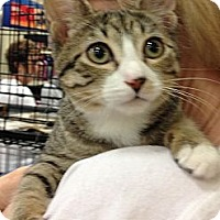 Adopt A Pet :: Fay - Pittstown, NJ