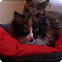 Adopt A Pet :: Susan's- Cassie - Cincinnati, OH