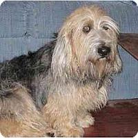 Adopt A Pet :: Sir CHesterfield - Scottsdale, AZ