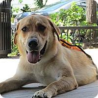 Adopt A Pet :: Noah - Alexandria, VA