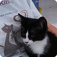 Adopt A Pet :: A.J. - Sterling Hgts, MI