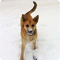 Adopt A Pet :: Lulu - Cleveland, OH