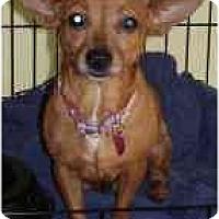 Adopt A Pet :: Penny - Miami, FL