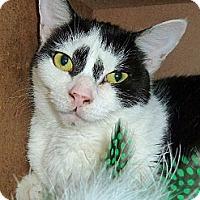 Adopt A Pet :: Chastity - Carmel, NY