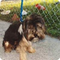 Adopt A Pet :: Lucky - Pembroke pInes, FL