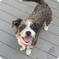 Adopt A Pet :: Esty - Bardonia, NY