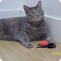 Adopt A Pet :: Imogen - Milwaukee, WI