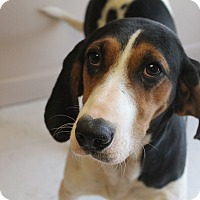Adopt A Pet :: Lacy (has been adopted) - Albany, NY
