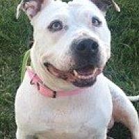 Adopt A Pet :: Sugar - San Diego, CA