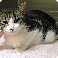 Adopt A Pet :: Taffy - Redding, CA