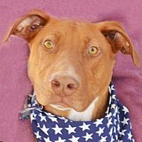Doberman Pinscher Mix Dog for adoption in Littlerock, California - Pippin