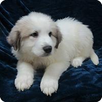 Adopt A Pet :: Daphne - Bartonsville, PA
