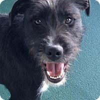 Adopt A Pet :: Bo COME MEET ME!! - Norwalk, CT