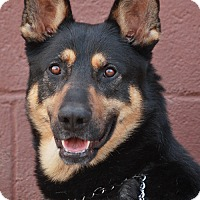 Adopt A Pet :: Drake von Drebkau - Los Angeles, CA