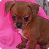Adopt A Pet :: Cinnamon - La Habra Heights, CA
