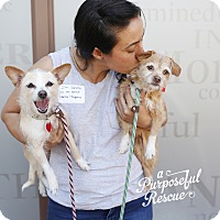 Adopt A Pet :: Eugenia and Darla *bonded pair - Los Angeles, CA