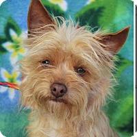Adopt A Pet :: VIOLET - Red Bluff, CA