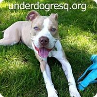 Adopt A Pet :: Kosmo - Framingham, MA