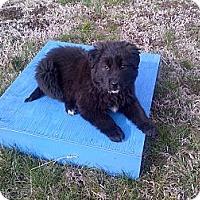 Adopt A Pet :: Pooh - Harrisburgh, PA