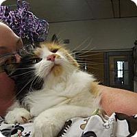 Adopt A Pet :: Patsy - Walnut, IA
