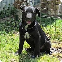 Adopt A Pet :: BENTLEY - Humboldt, TN