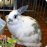 Adopt A Pet :: Clara - North Gower, ON