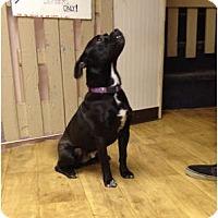 Adopt A Pet :: Zeus - Fort Hunter, NY