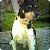 Adopt A Pet :: Buckley - Carmel, IN