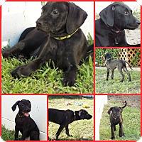 Adopt A Pet :: HANSI GREEN - Inverness, FL