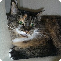 Adopt A Pet :: Zelda - Hamburg, NY
