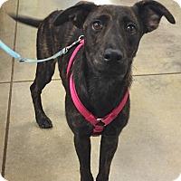 Adopt A Pet :: Tish - Orlando, FL