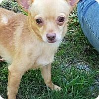 Adopt A Pet :: Seymour - Washington, PA