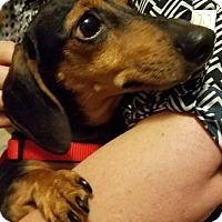 Adopt A Pet :: Maisy COURTESY POST - Chesterfield, MI