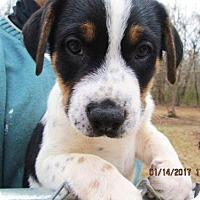 Adopt A Pet :: BLUE - Williston Park, NY