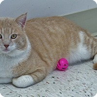 Adopt A Pet :: Epperson - Chambersburg, PA