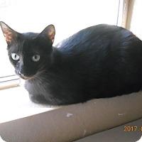 Adopt A Pet :: Onyx - Chandler, AZ