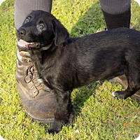 Adopt A Pet :: Herman - Seahurst, WA