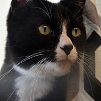 Adopt A Pet :: Hans - Des Moines, IA