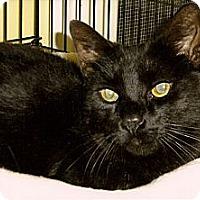 Adopt A Pet :: Benji - Medway, MA