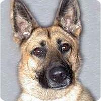 Adopt A Pet :: Rosemarie - New York, NY