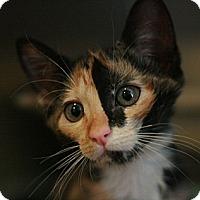 Adopt A Pet :: Mika - Canoga Park, CA
