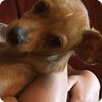 Adopt A Pet :: Diego - Cranford, NJ