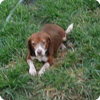 Adopt A Pet :: Doogie - Palm Bay, FL
