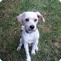 Adopt A Pet :: Skippy - Sacramento, CA