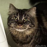 Adopt A Pet :: Malory - Los Angeles, CA