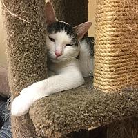 Adopt A Pet :: Ares - Westbury, NY