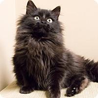 Adopt A Pet :: Jeannie - Chicago, IL