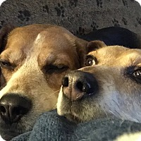 Adopt A Pet :: Bella and Roxy (love us) - Sterling Hgts, MI