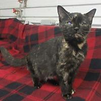 Adopt A Pet :: Willa - Elkins, WV