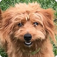 Adopt A Pet :: Rusty Rangerover - Houston, TX